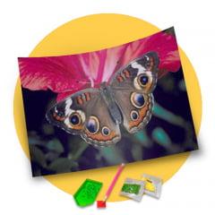 Pintura Com Diamantes - Tela Beleza da Borboleta - 36 x 30 cm - Diamante Redondo